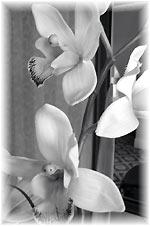 BEST WESTERN PLUS Langley Hotel Flower